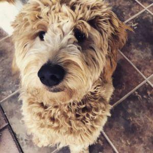 Sadie-g-pup4