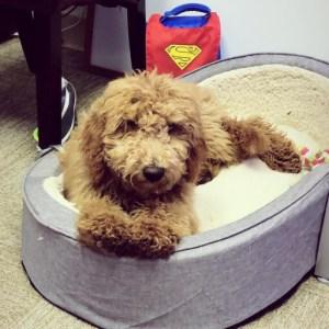 Violet-pup