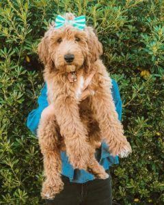 Rosie_pup3