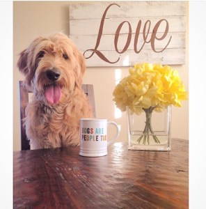 Photo Gallery- F1 Goldendoodle 31