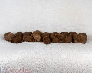 Molly's Newborn Photos (Males on right side)