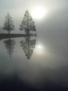 Image result for fog with sun