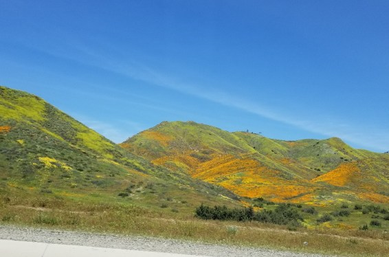 poppies viewed from I-15, Walker Canyon
