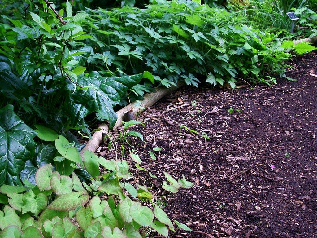 woodland-garden-path
