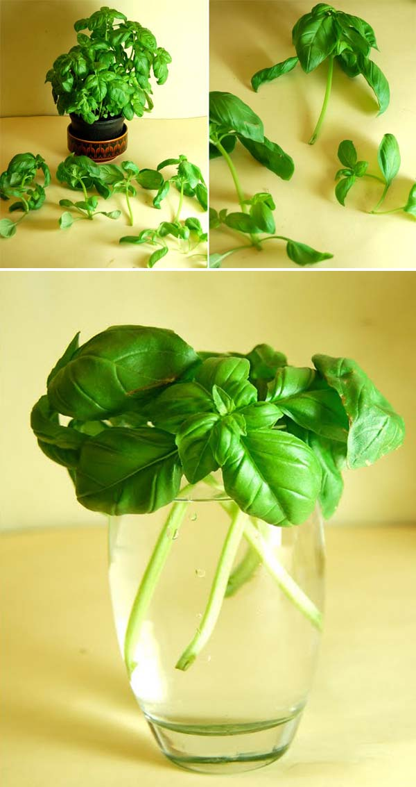 Keep Fresh Greenery At Grasp With Vegetables That Regrow From Scraps-usefuldiyprojects (1)