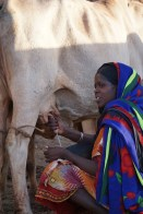 Dhaki is experienced and quickly collects the milk for the day. What her family doesn't drink will be sold in the market in Negele.