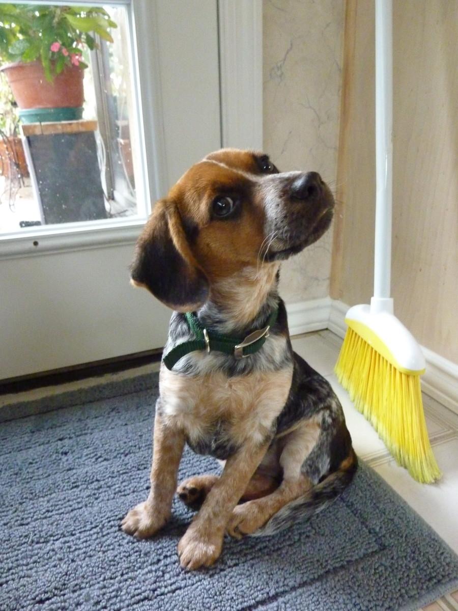 Orange dog collar and lead my dog keeps vomiting at night ...