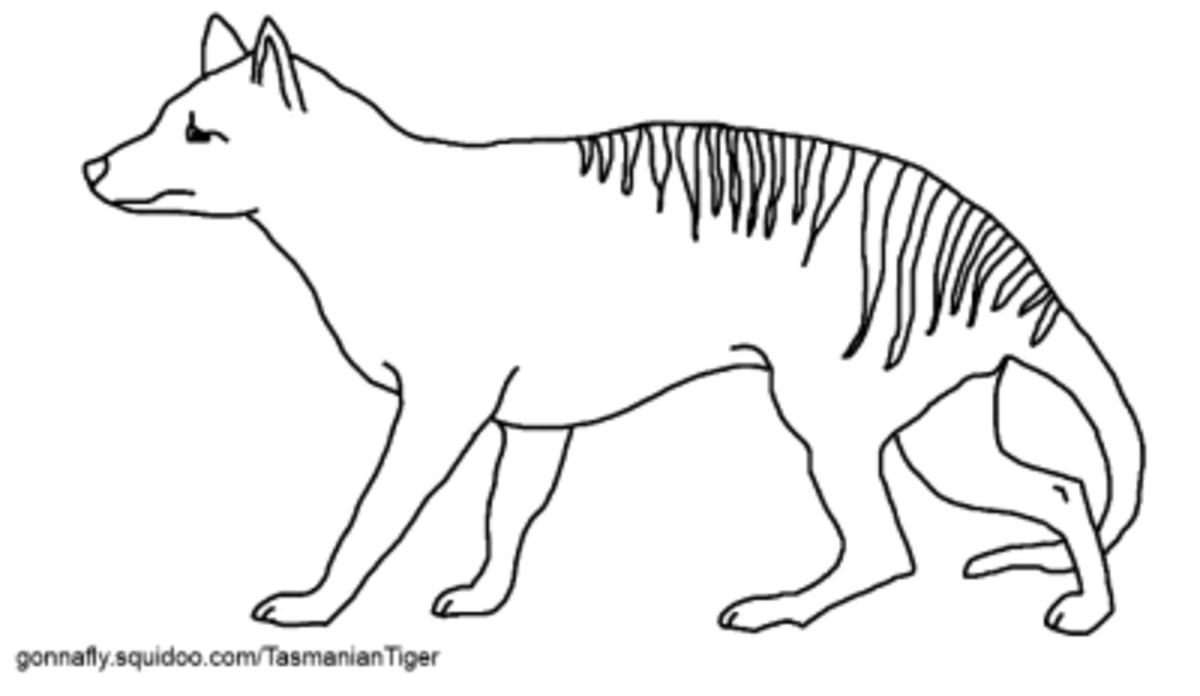 Tasmanian Tiger Thylacine Coloring Page
