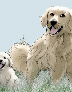 As your golden retriever matures from  puppy to full grown dog it also growth sequence in the st year pethelpful rh