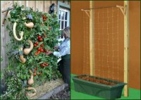 Container Tomato Gardening