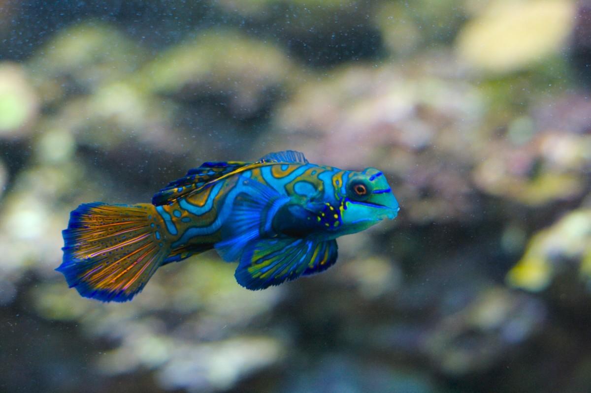 List Of Sea Animals A Z