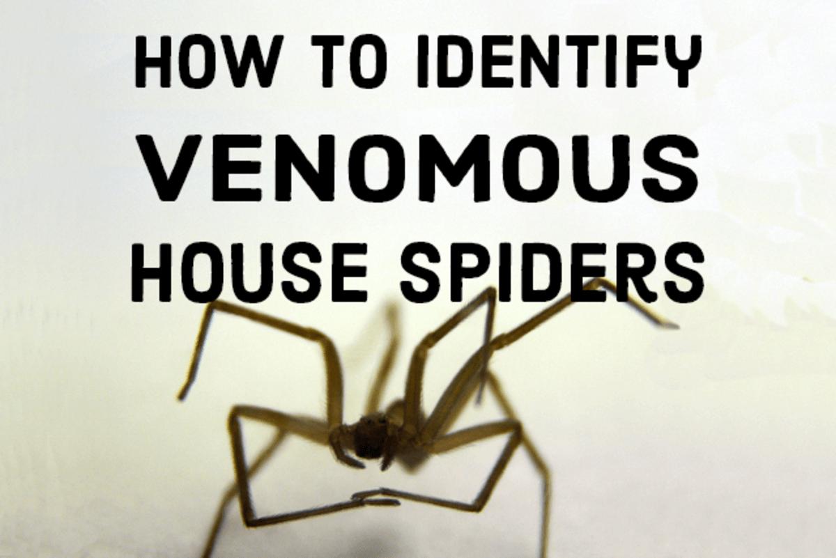 Nj Spider Identification Chart
