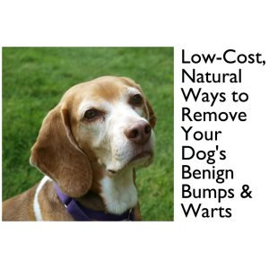 Deluxe Sebaceous Cyst Dog By Sebaceous Cyst Dog Photo Credit