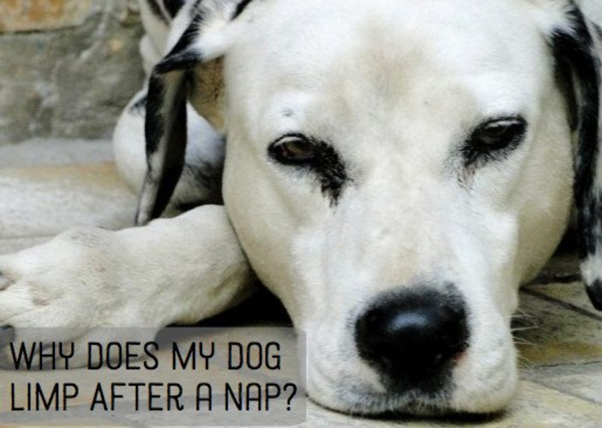 Why Does my Puppy Pee After Going Outside? | PetHelpful