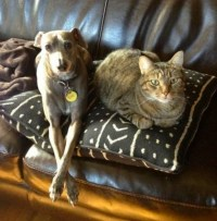 Can Cats or Dogs Get Bed Bugs?