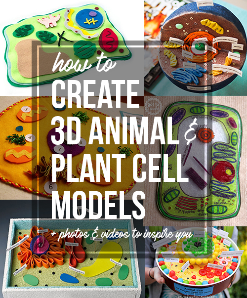3d animal cell coloring diagram 2 way wiring how to create plant and models for science class a step by tutorial creating