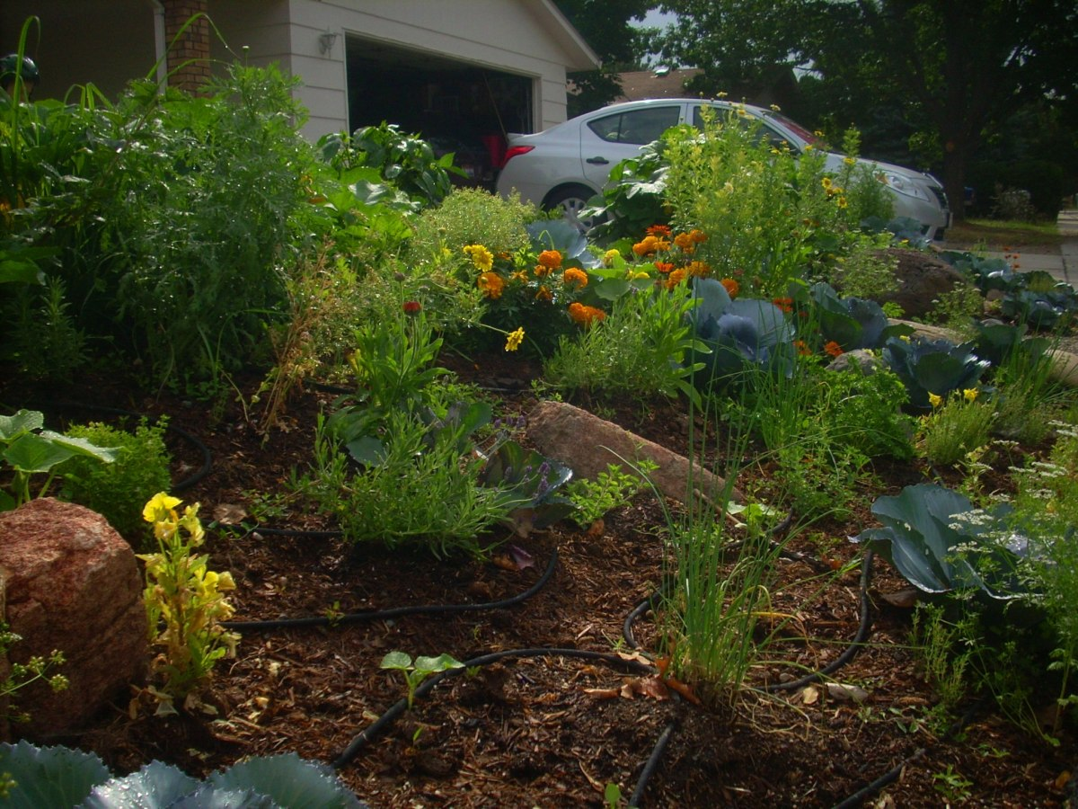 Edible Landscaping in the Front Yard  Dengarden