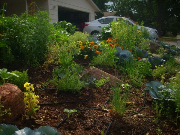 edible landscaping in front