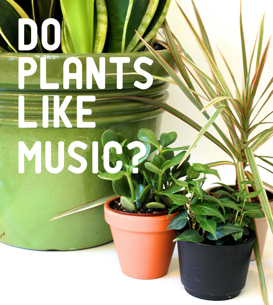 so that you can weigh the evidence and draw your own conclusions first we ll discuss the studies that support the idea that music helps plants grow