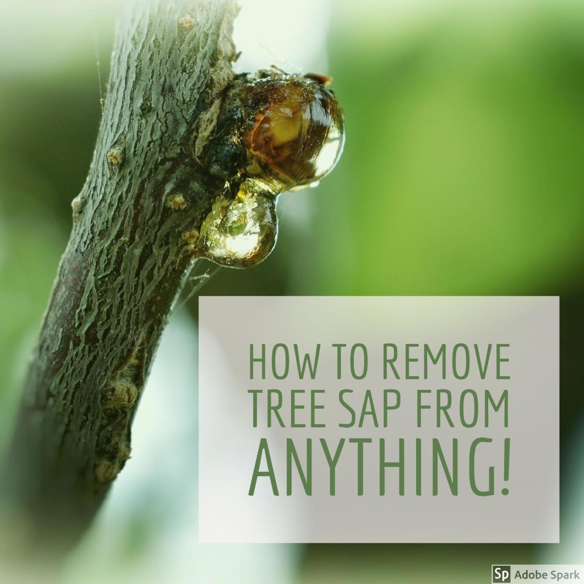 How to Remove Sticky Tree Sap or Pine Pitch From Almost Anything  Dengarden
