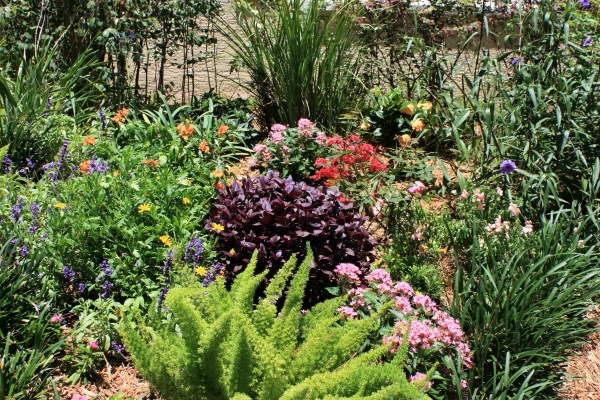 plants thrive in sun
