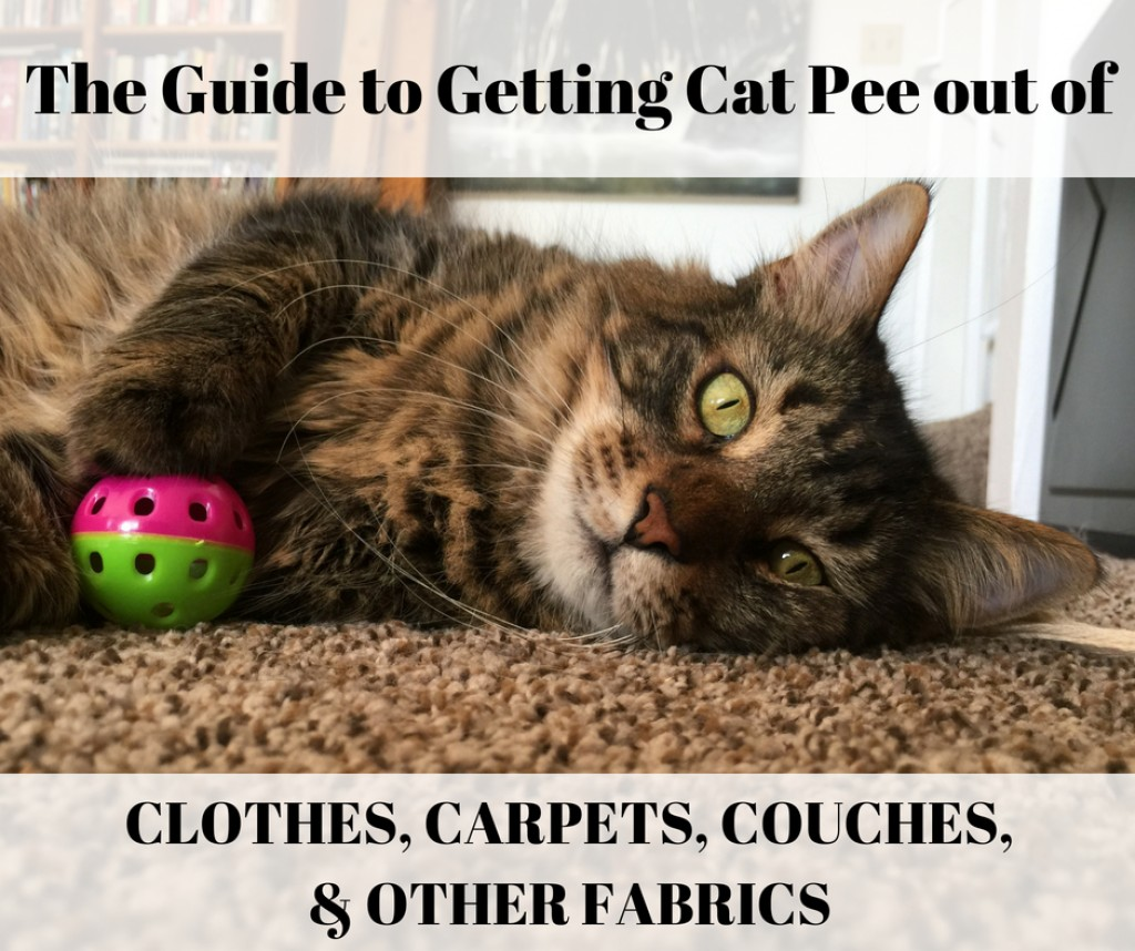 cat urine on sofa cushion replace a leg how to get pee out of clothes towels rugs and