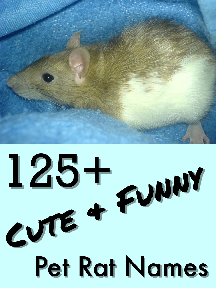 125 cute and clever