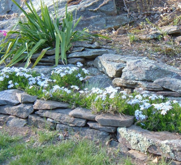 design rock garden landscaping