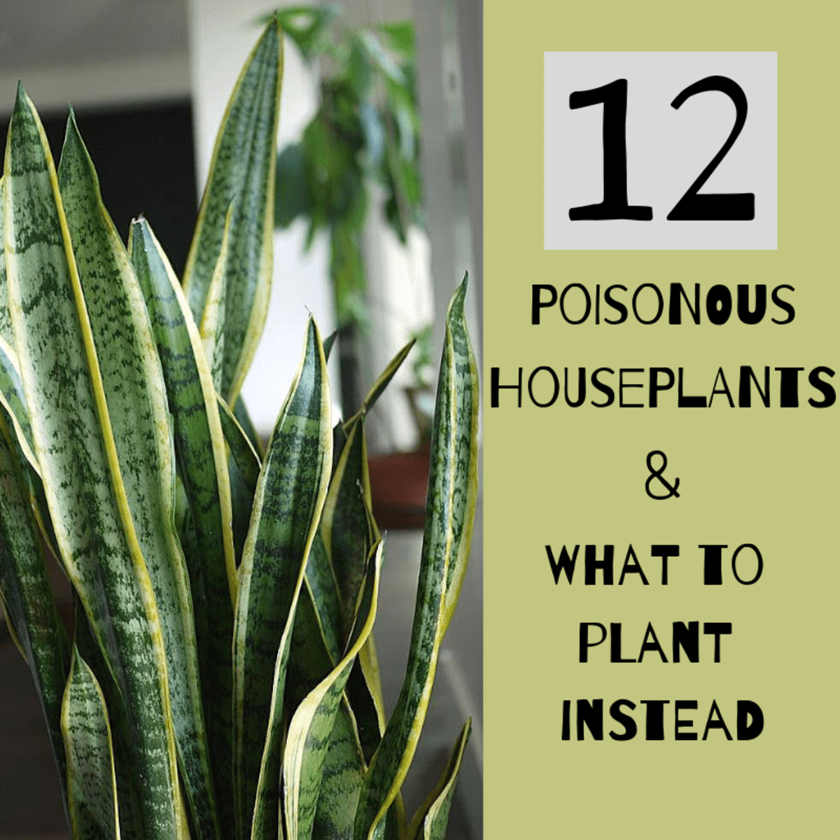 12 poisonous house plants