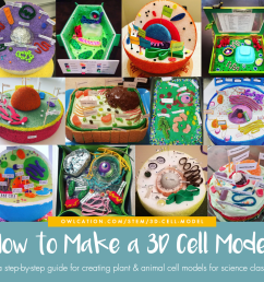 how to create 3d plant cell and animal cell models for science class [ 1024 x 994 Pixel ]