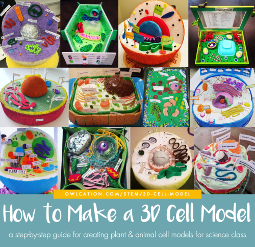 small resolution of how to create 3d plant cell and animal cell models for science class