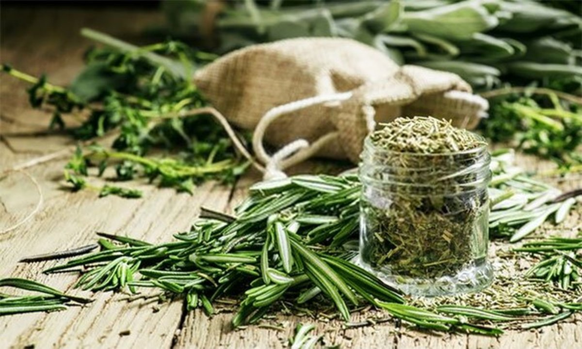 Substitute Dried Rosemary for Fresh: How to Dry Rosemary ...