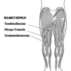 Upper Leg Muscles Diagram Yamaha G8 Gas Golf Cart Wiring Human Anatomy And Physiology Of | Hubpages