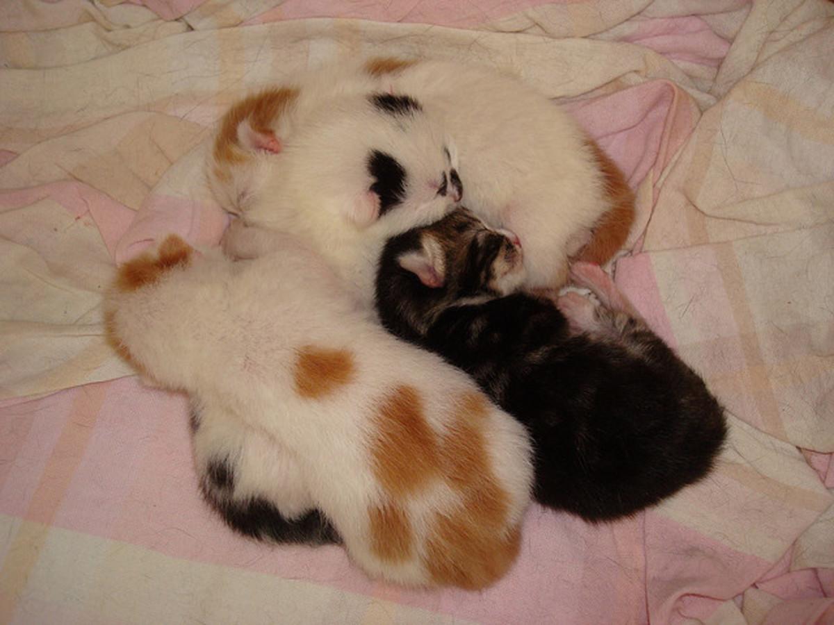 How to Take Care of Newborn Kittens: Week by Week   PetHelpful