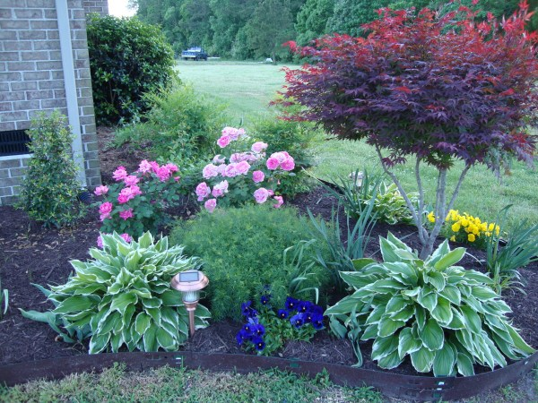 yard full of color ideas