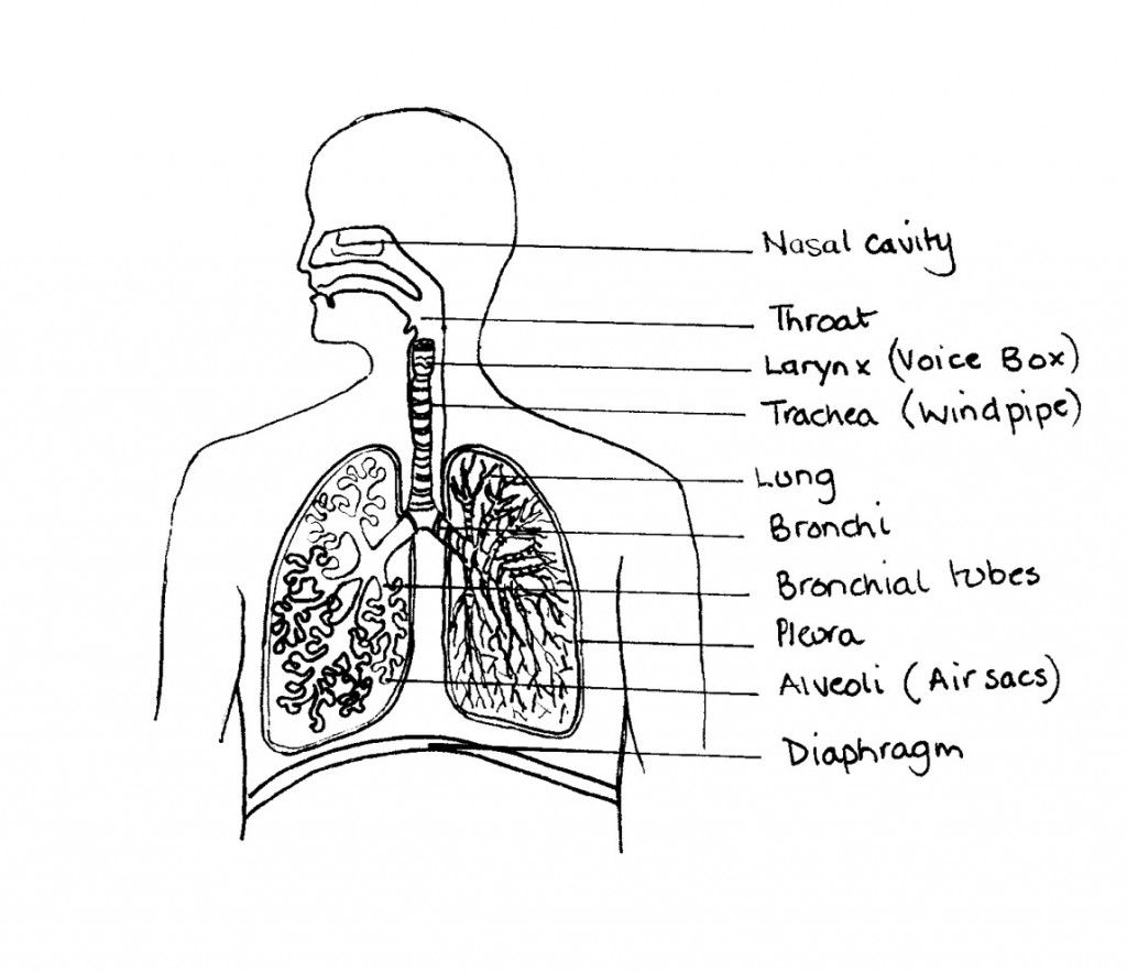 Asthma & its symptoms: including a plan diagram of a