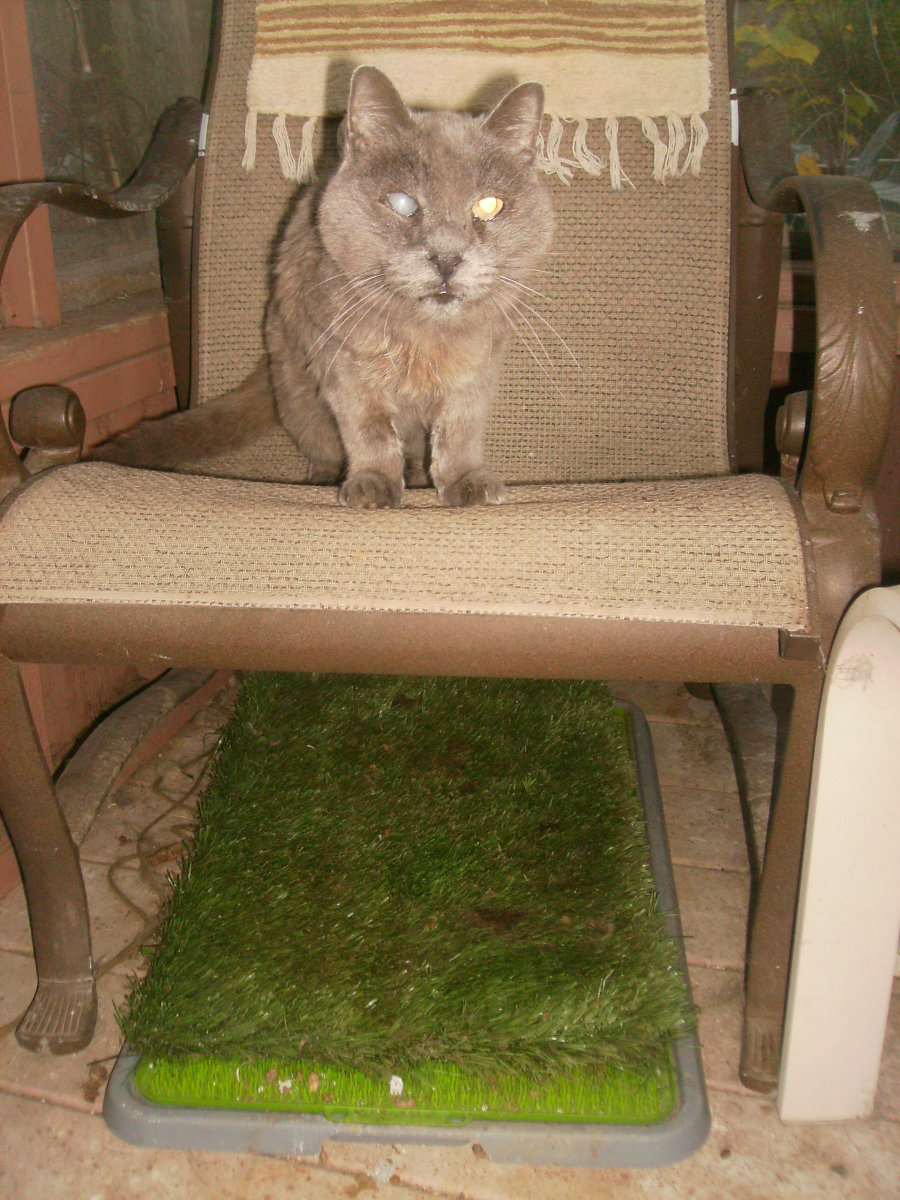 Will a Cat Use Potty Patch Grass Mat instead of a Litter