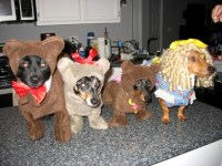 Goldilocks and The Three Bears Costumes | HubPages