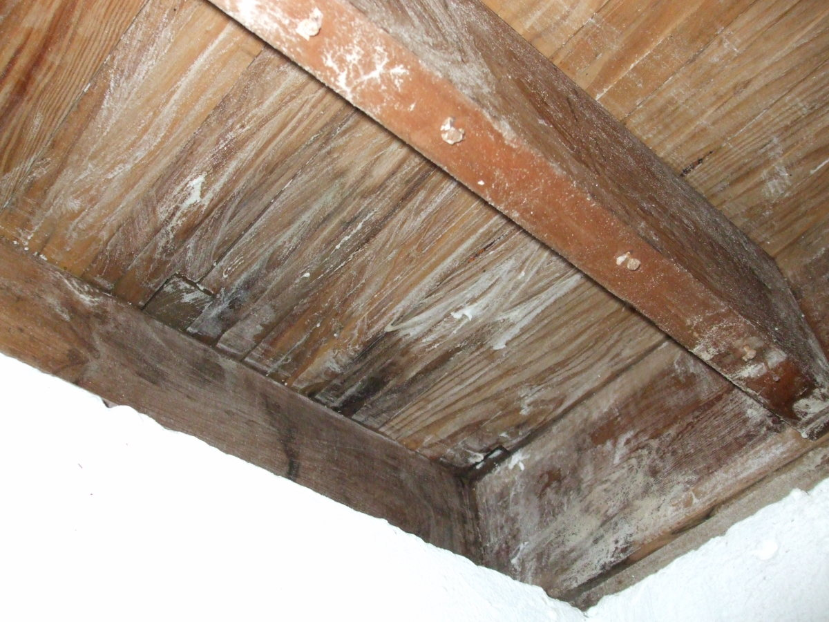 How to Treat a Mold Infestation on Wood With Borax 20 Mule ...