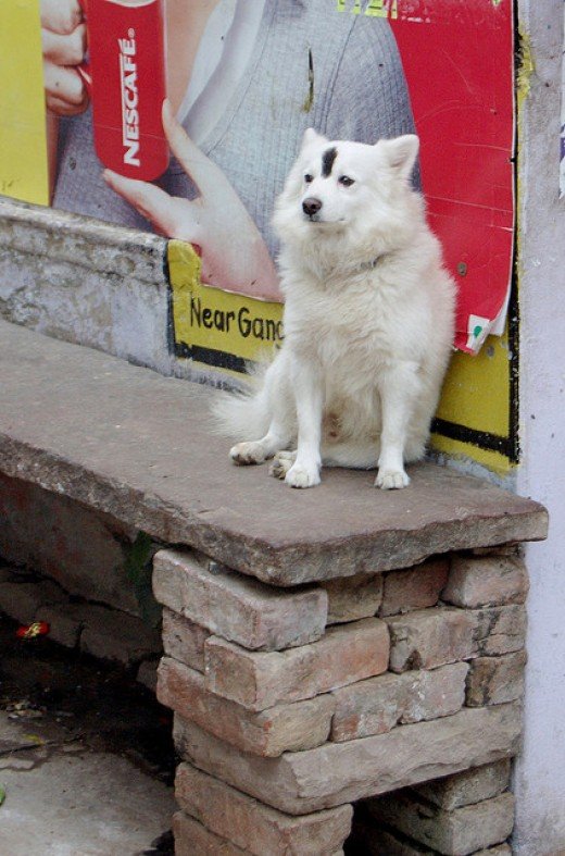 To help chase down prey and protect t. Best Hindi Dog Names From India | PetHelpful