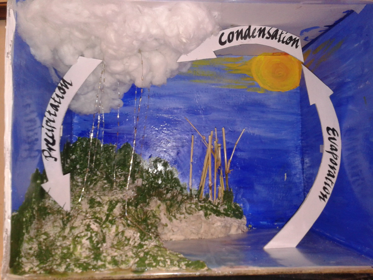 How To Make An Eco Friendly Model On Water Cycle In Kids