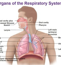 respiratory physiology introduction [ 1024 x 869 Pixel ]
