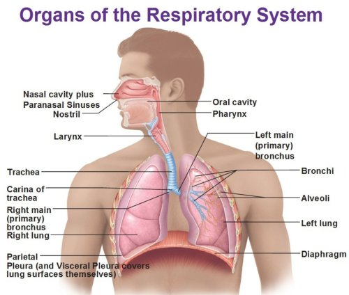 small resolution of respiratory physiology introduction