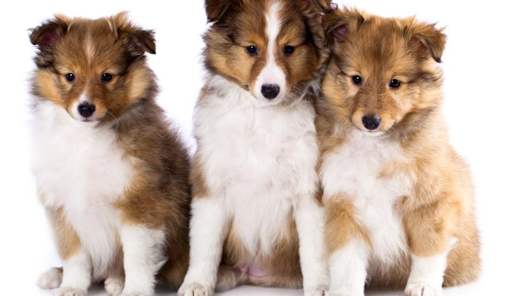 Boy Puppy - Photos of Animals