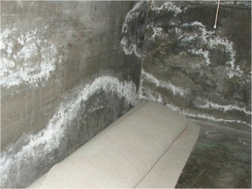 White Fuzzy Mold In Basement or Something Else? | HubPages