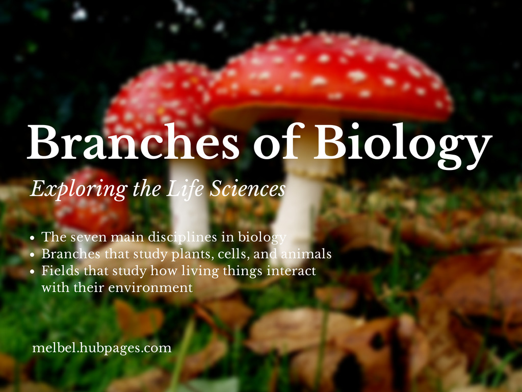 List Of The Branches Of Biology