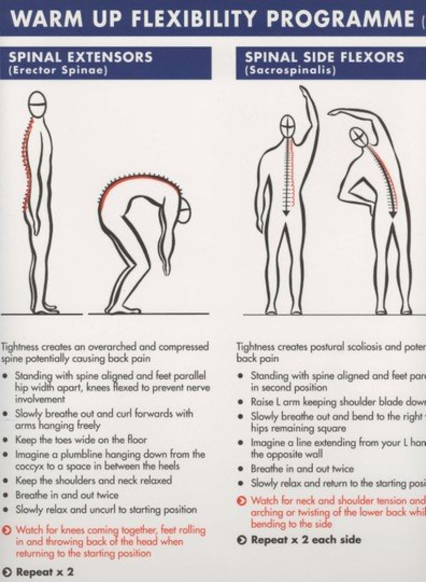 black and white diagram of person stretching showing how the back muscles are stretched