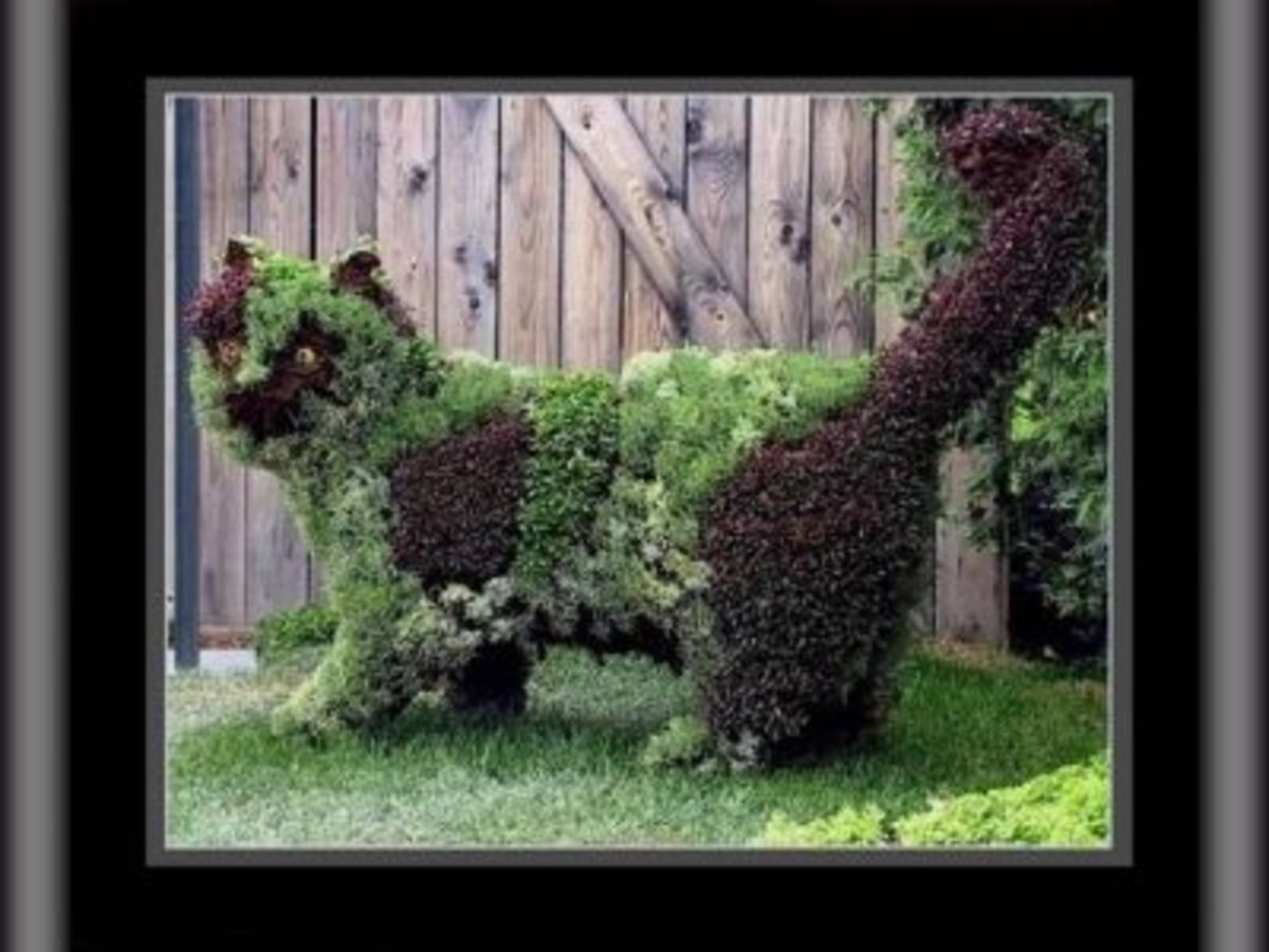 How to Make a Topiary  HubPages
