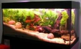 The Best and Worst Beginner Fish for Your Aquarium ...