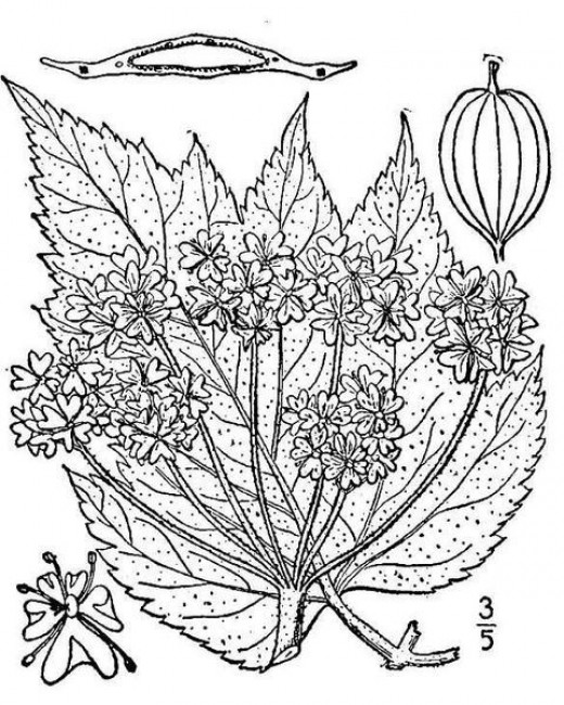 Nature Coloring Pages and Sheets for Kids and Adults